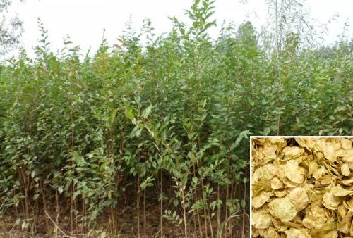 林木种子种植