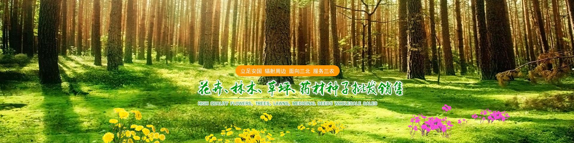 林木种子价格